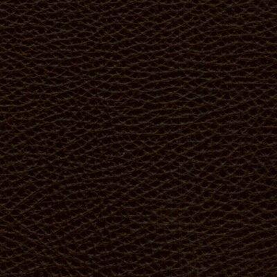 Pisa 2105 - testa di moro