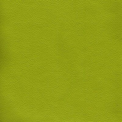2050 - kiwi